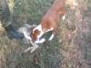 Верни ловачки пас