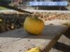 Јесен у Злакуси