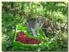 Активни одмор - Берба малина у Злакуси